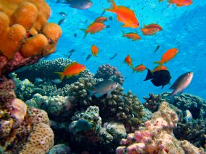 Marine Biology - Marji McIlvaine - MyFunScience.com